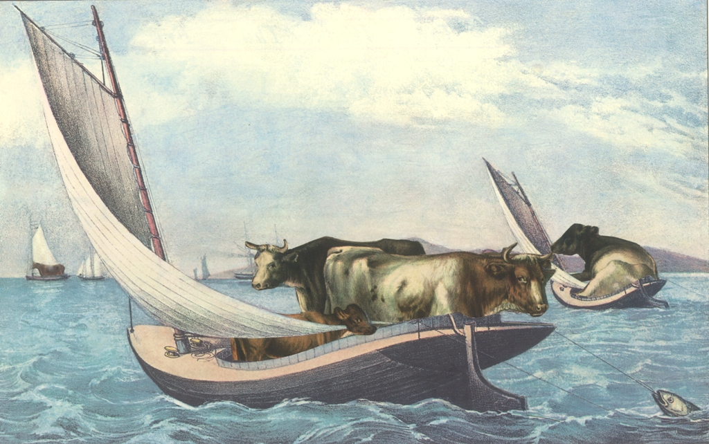 cows-in-boats-WEBSIZE.jpg